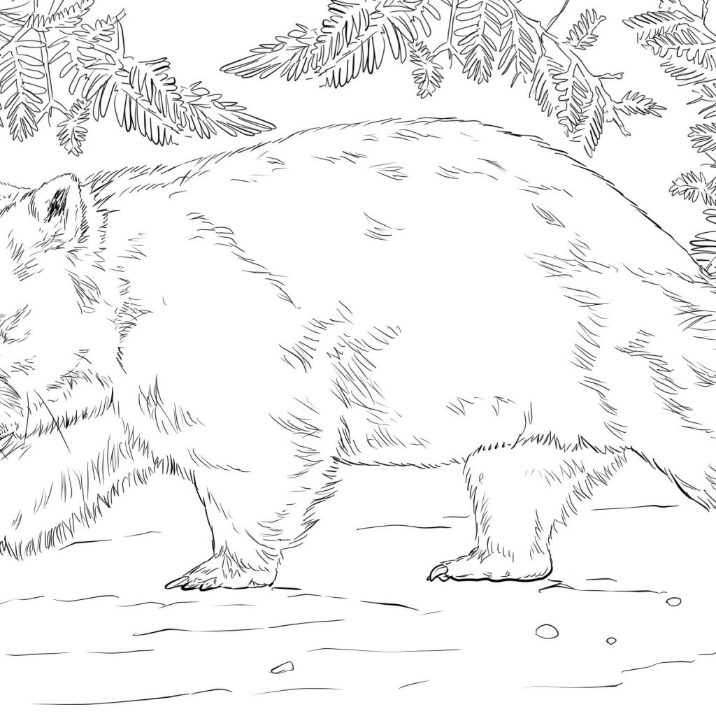 Australian Santa Coloring Page With Wombat Bear Free Printable Pages