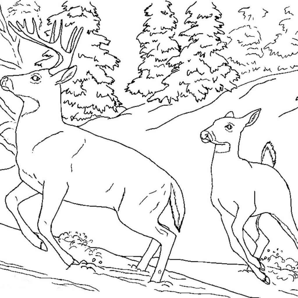 Christmas Animals Coloring Pages Printable With Realistic Of Deer Animal