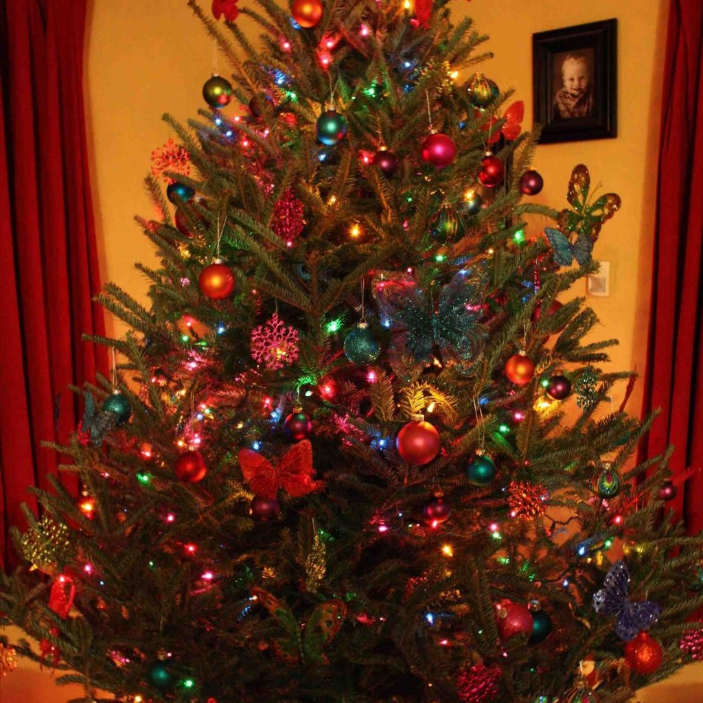 Christmas Colored Lights With Multi Tree Ideas Fresh