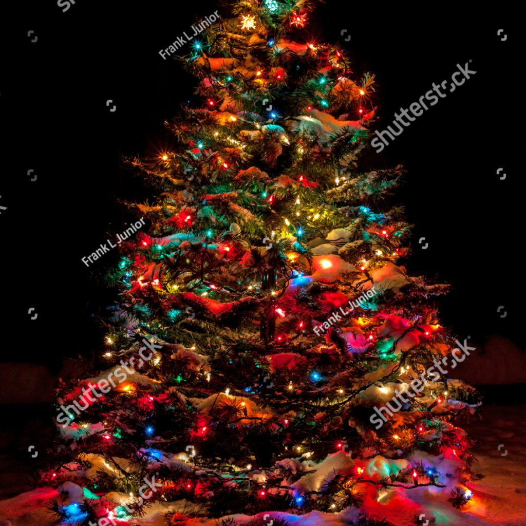 Christmas Colored Lights With Snow Covered Tree Multi At Night EZ