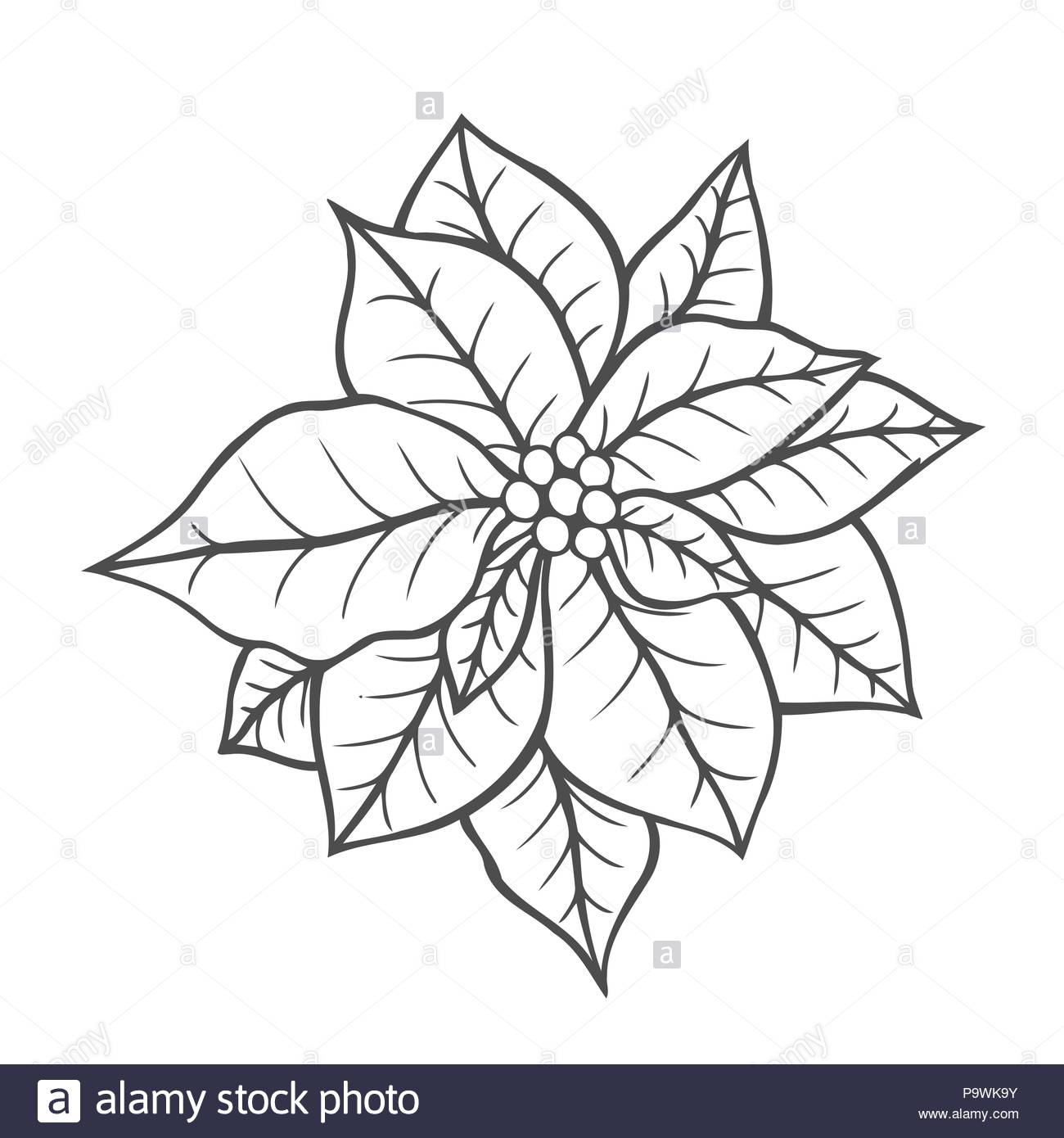 Christmas Coloring Book Vector With Poinsettia Isolated Flower Vintage Artwork Black