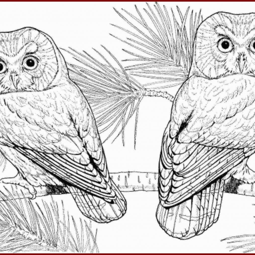 Christmas Coloring Pages Owls With How To Scare Birds Away From Home Lovely Color Page