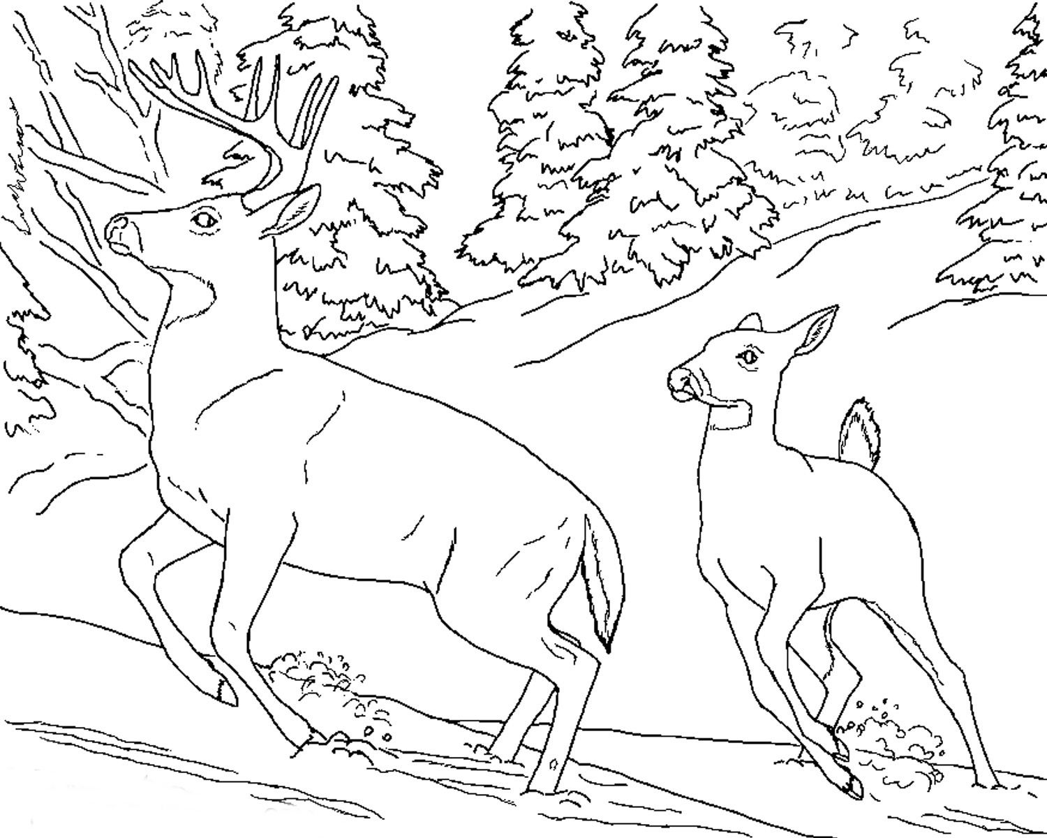 Christmas Deer Coloring Pages With Realistic Of Animals Animal