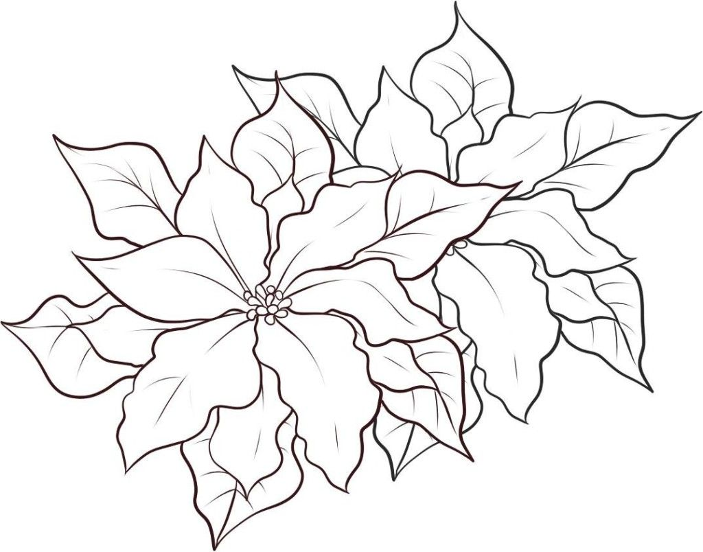 Christmas Flower Coloring Pages With Free Printable Poinsettia Google Search Downloads