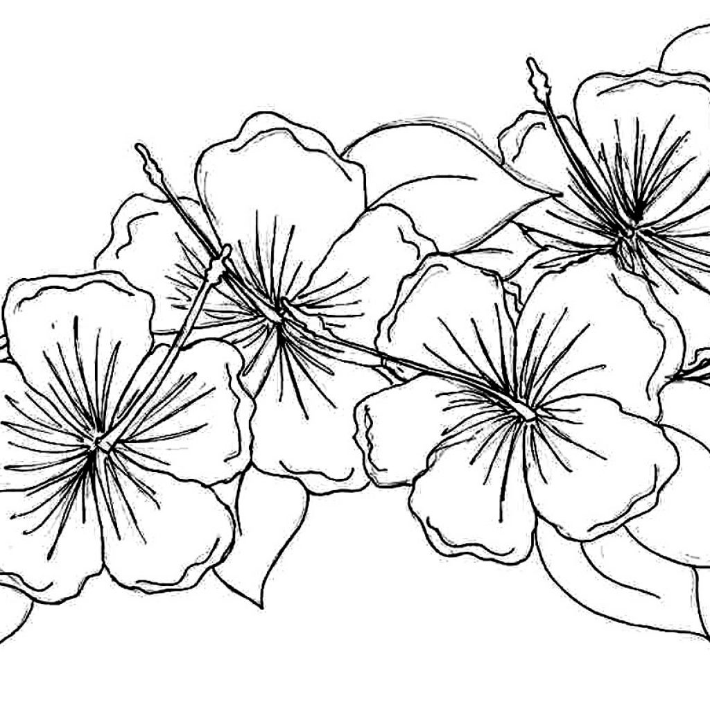 Christmas Flower Coloring Pages With Fresh Free Printable Gallery
