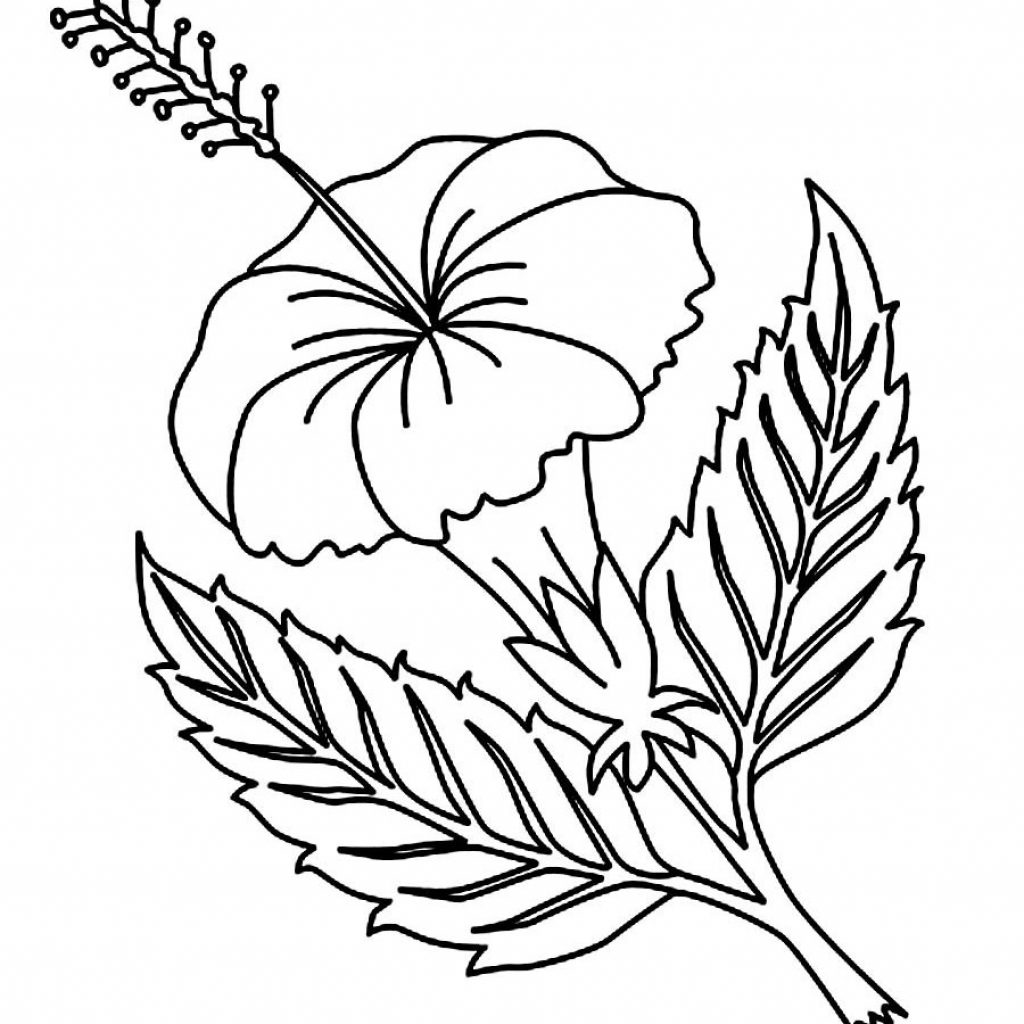 Christmas Flower Coloring Pages With Fresh Realistic Gallery Printable Sheet