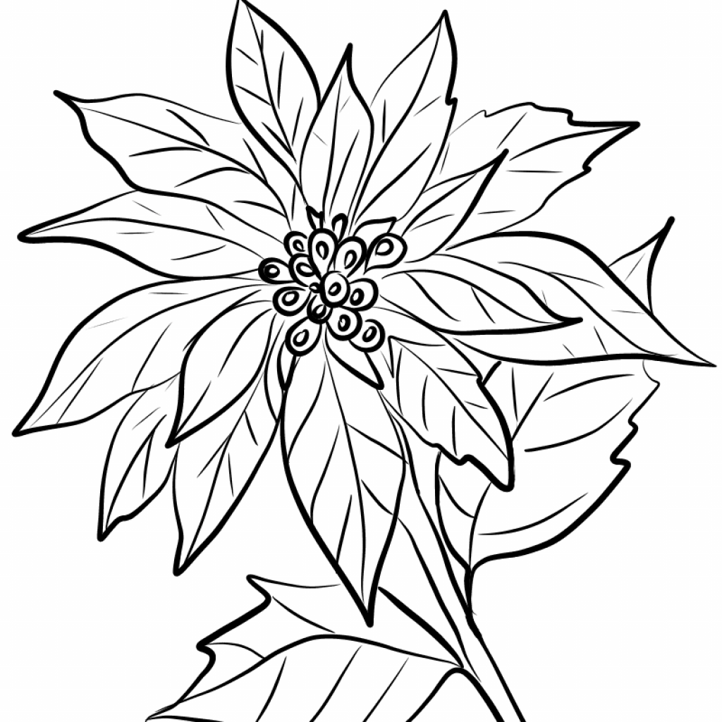 Christmas Flower Coloring Pages With Image Result For Drawing Draw Art Zebra Pinterest