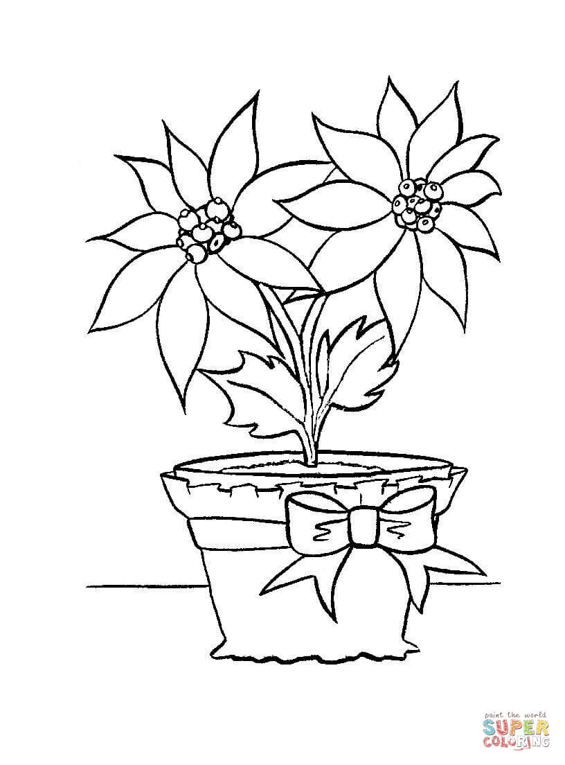 Christmas Flower Coloring Pages With In A Pot Page Free Printable
