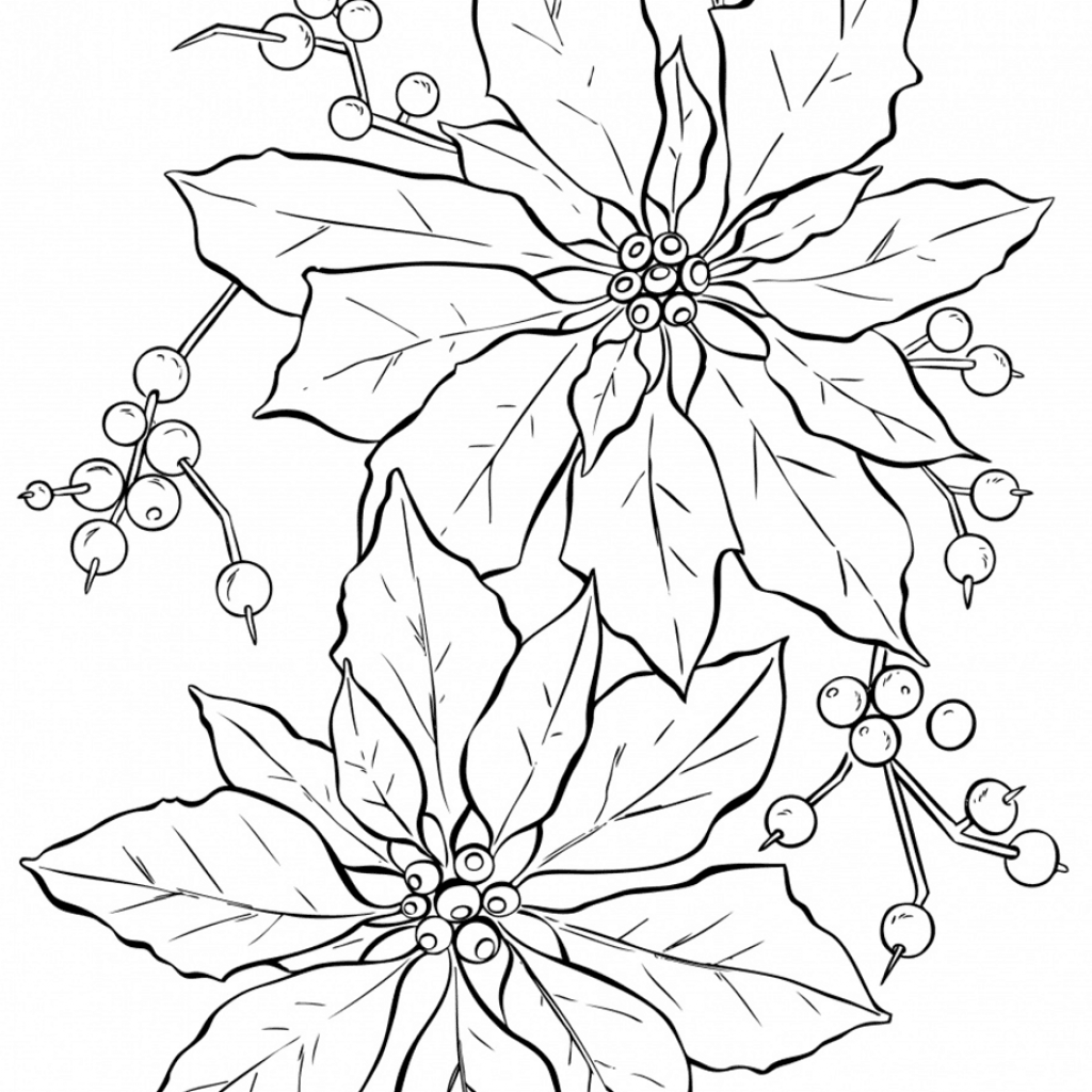 Christmas Flower Coloring Pages With Poinsettia Super Pinterest