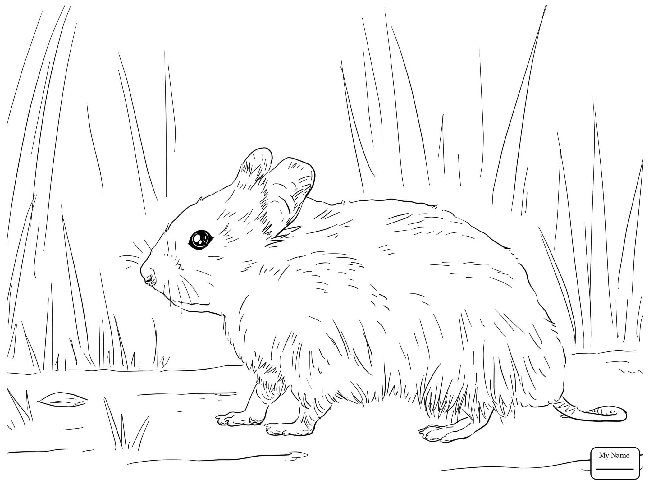 Christmas Hamster Coloring Pages With Cartoon New Realistic