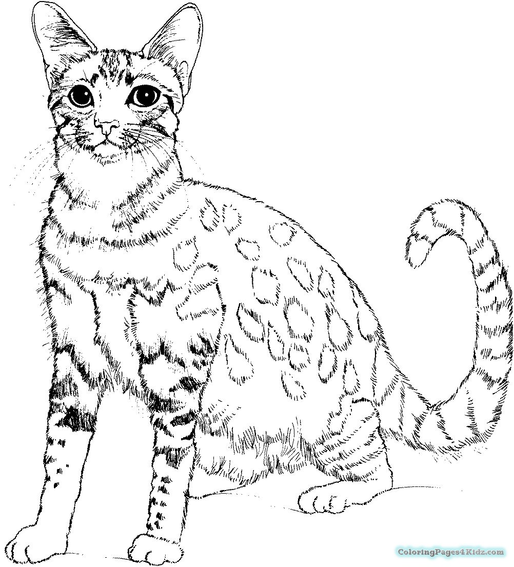Christmas Kitten Coloring Pages With For Kids
