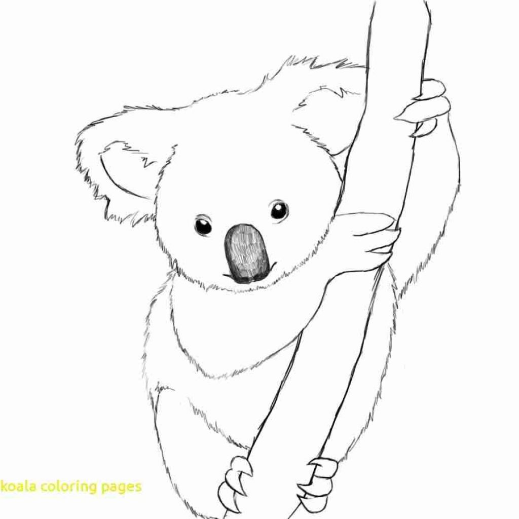 Christmas Koala Coloring Page With Easy Pages Australian Brilliant Bear At For