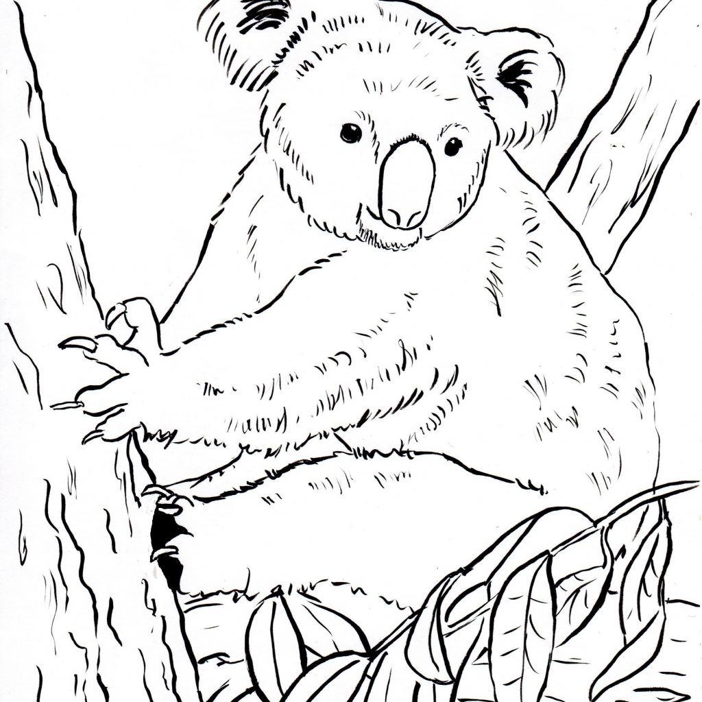 Christmas Koala Coloring Page With Pages 10 20644 Animage Me