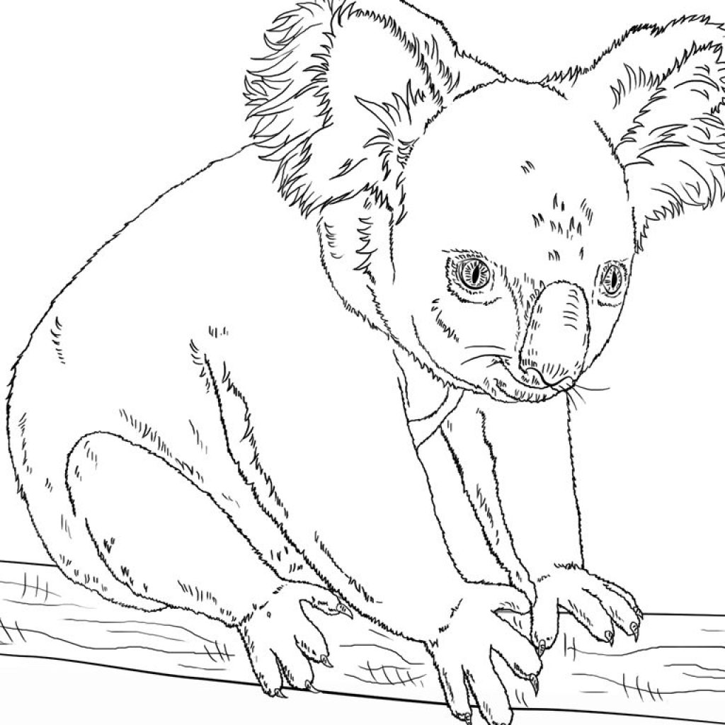 christmas-koala-coloring-page-with-pages-color-resize-realistic-chronicles-network