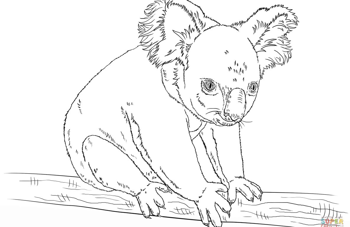 Christmas Koala Coloring Page With Pages Color Resize Realistic Chronicles Network