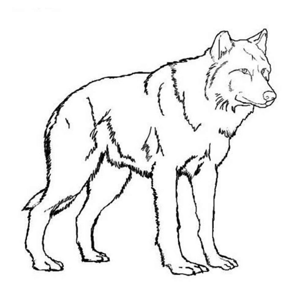 Christmas Wolf Coloring Pages With Print Download Theme