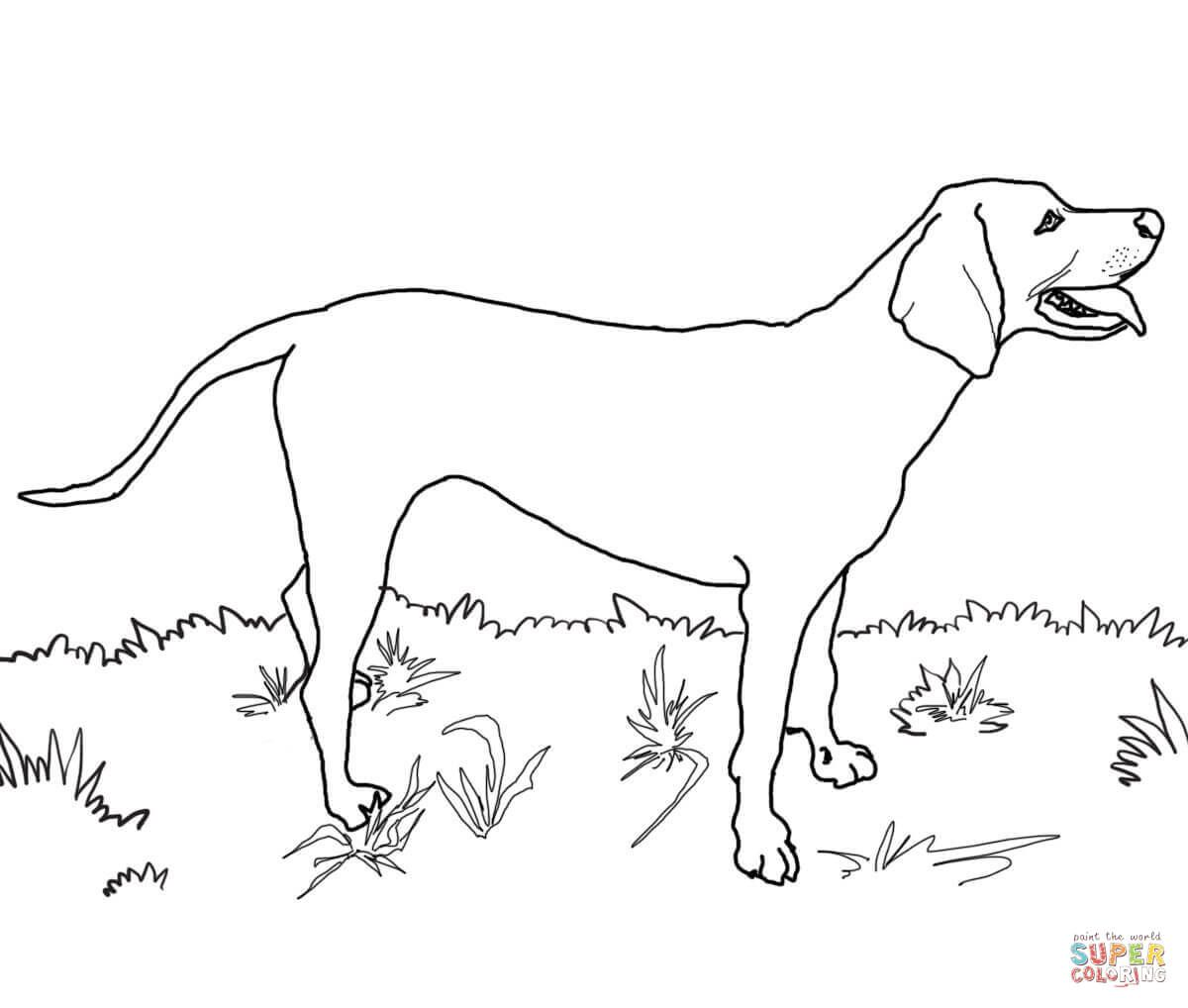 Santa Dog Coloring Pages With Redbone Coonhound Super Anasazi Pinterest