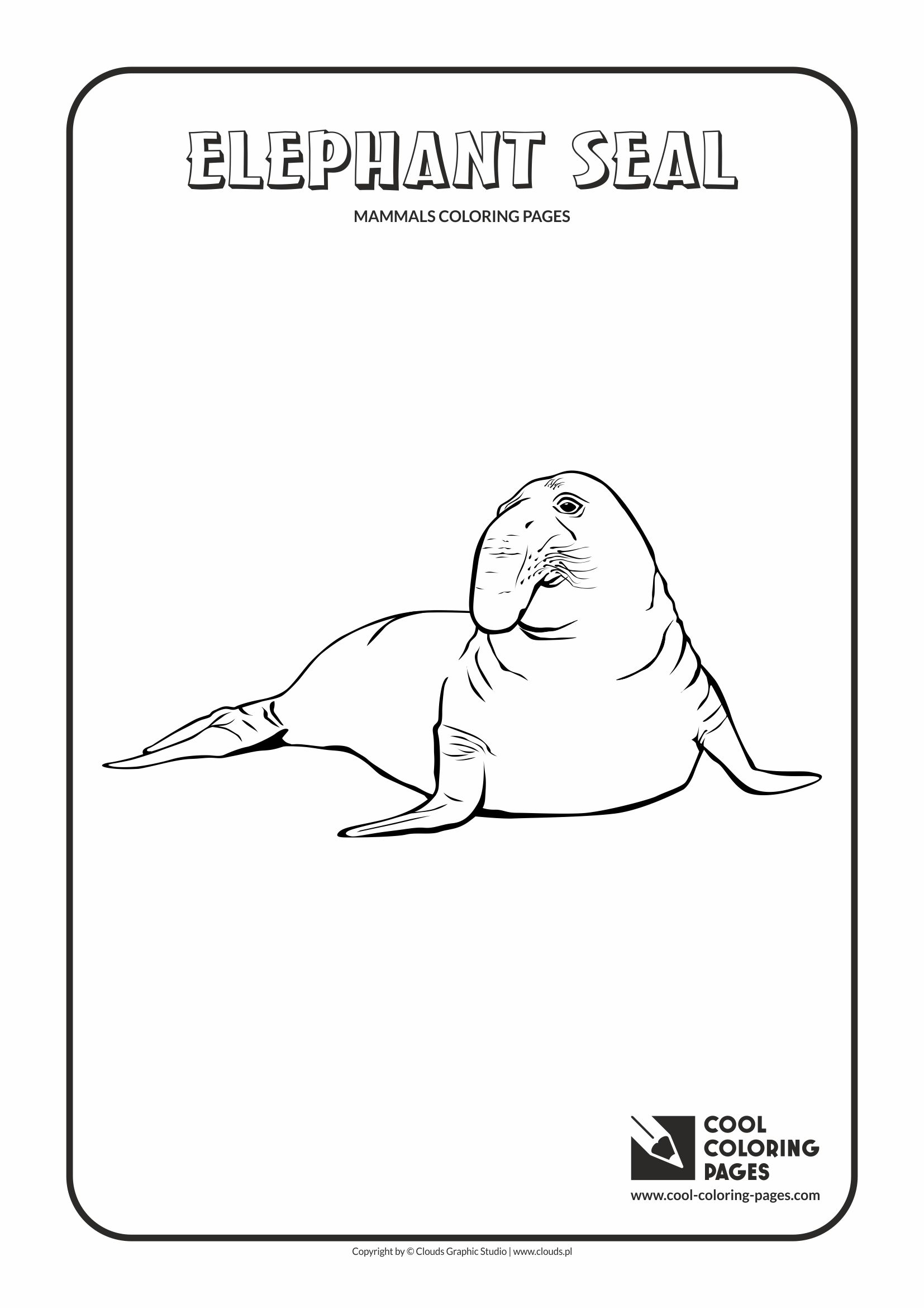 Santa Fe Coloring Pages With Cool Elephant Seal Page