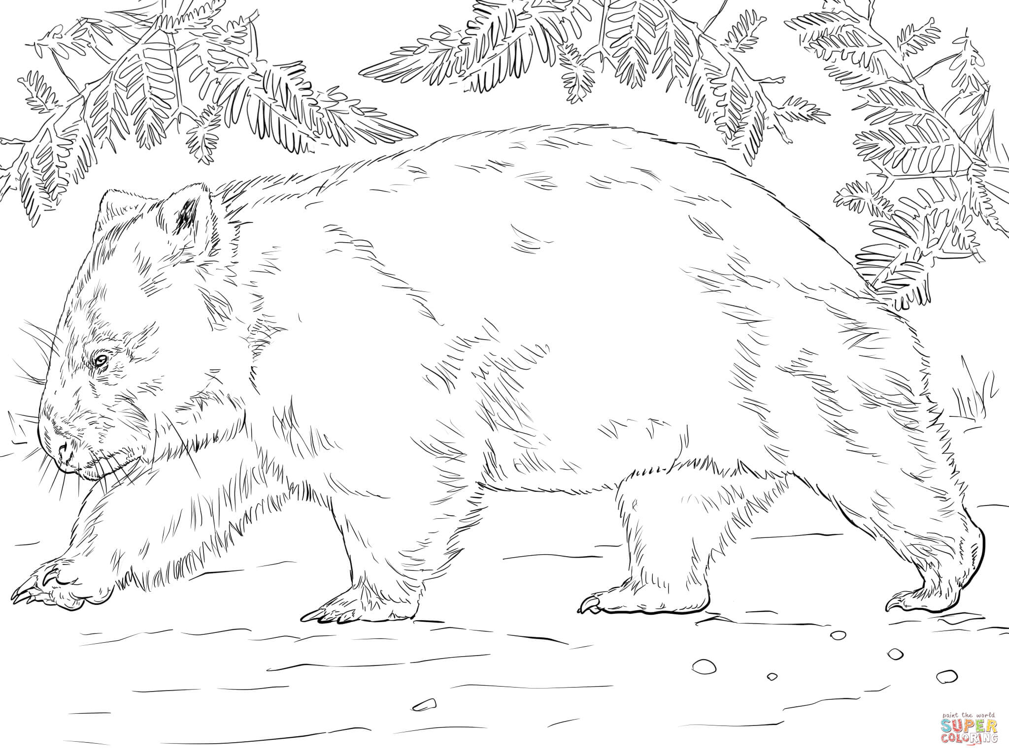 Santa In Australia Coloring Sheets With Wombat Bear Page Free Printable Pages