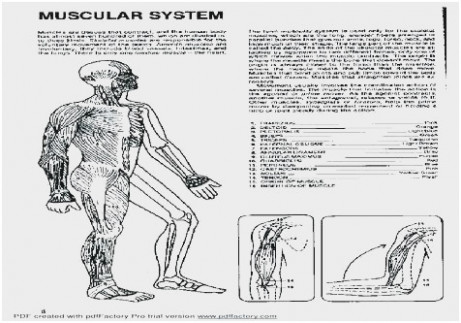 16 Great Images Of the Anatomy Answer Book Pdf | Grey's Anatomy