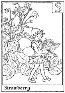 18 Best Flower Fairies to color images | Coloring books, Coloring ...