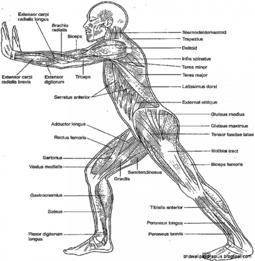 Anatomy And Physiology Coloring Workbook Answers | HD Wallpapers Plus – anatomy and physiology coloring book