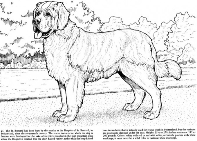 Best Coloring Books for Dog Lovers – Cleverpedia – dog coloring book