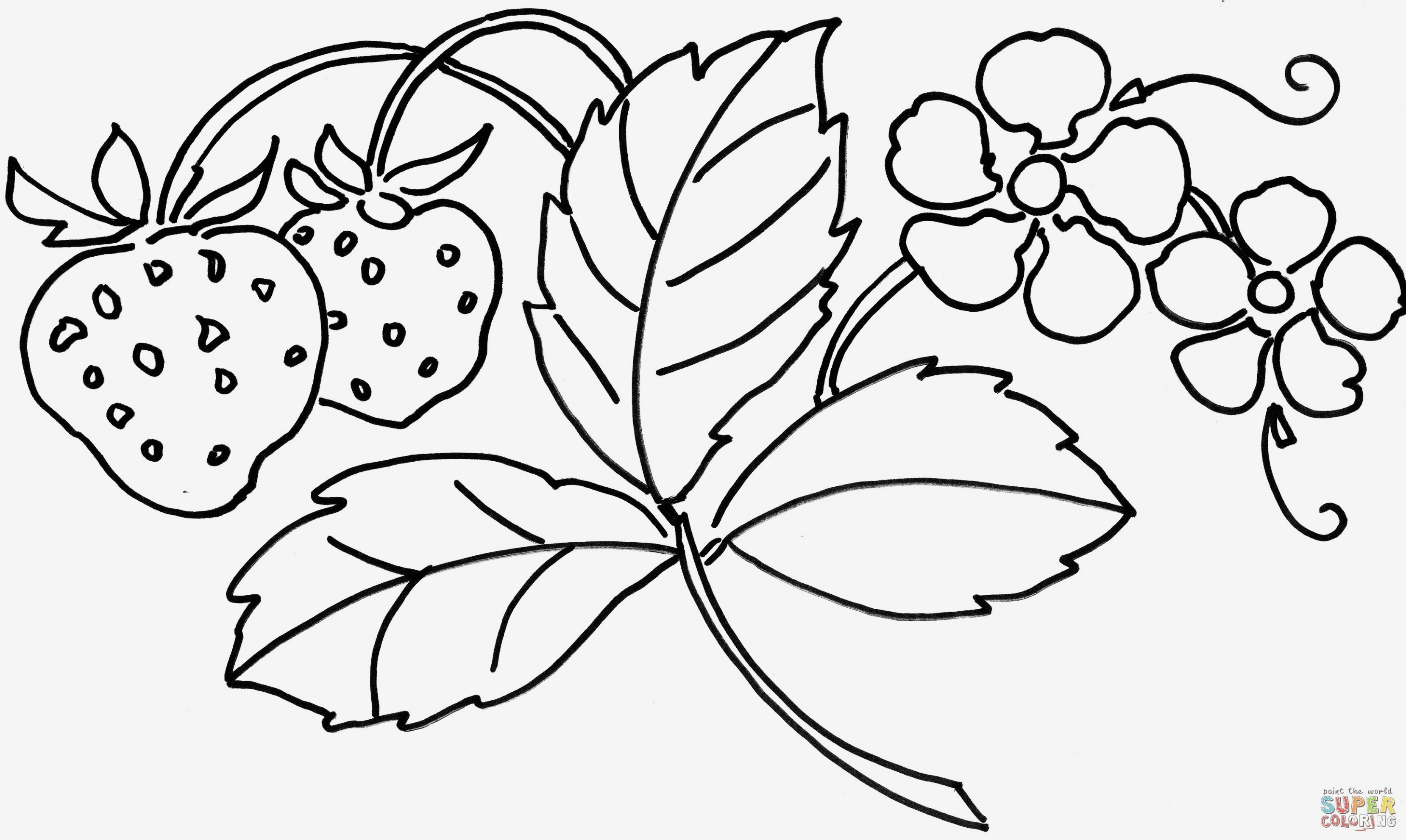 Bike Coloring Pages Free Printable where to Buy Coloring Books ...