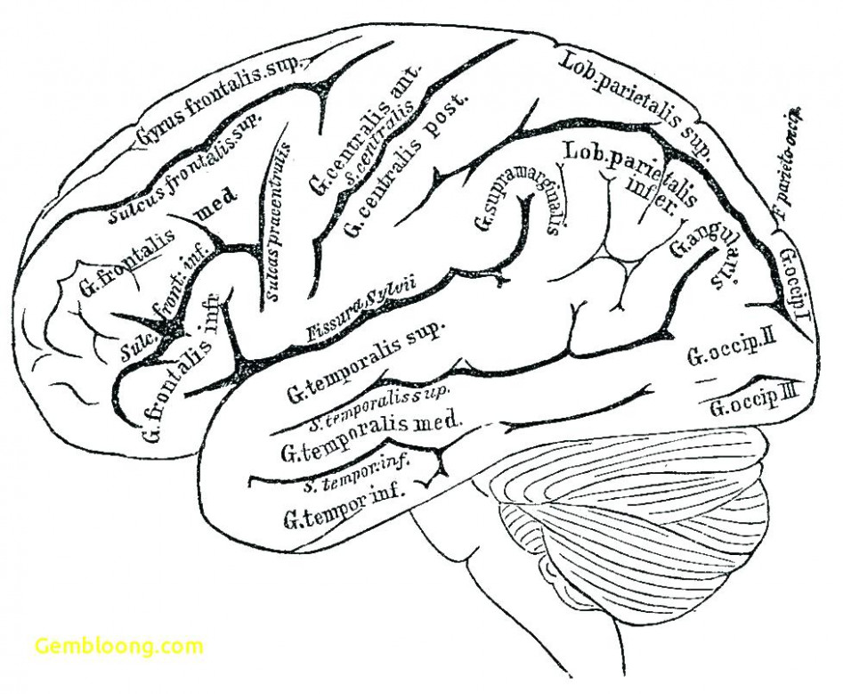 Brain Coloring Book Anatomy Coloring Pages Brain Coloring Sheet ..