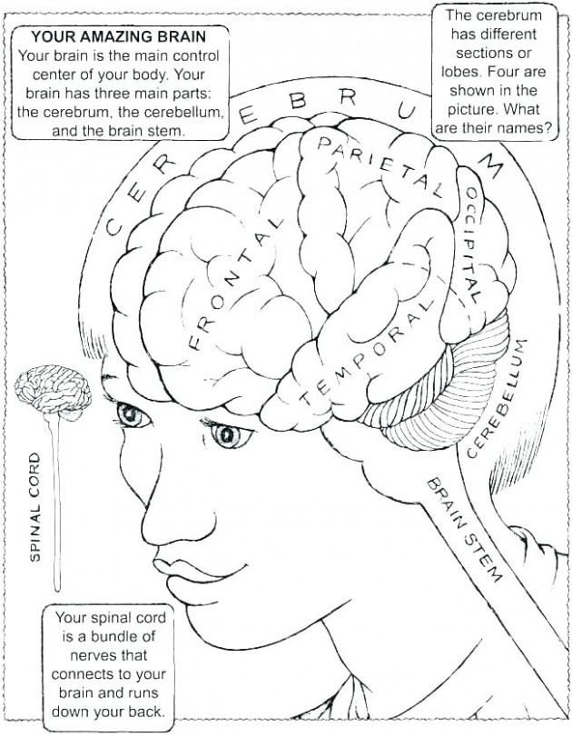 brain coloring book – onseries