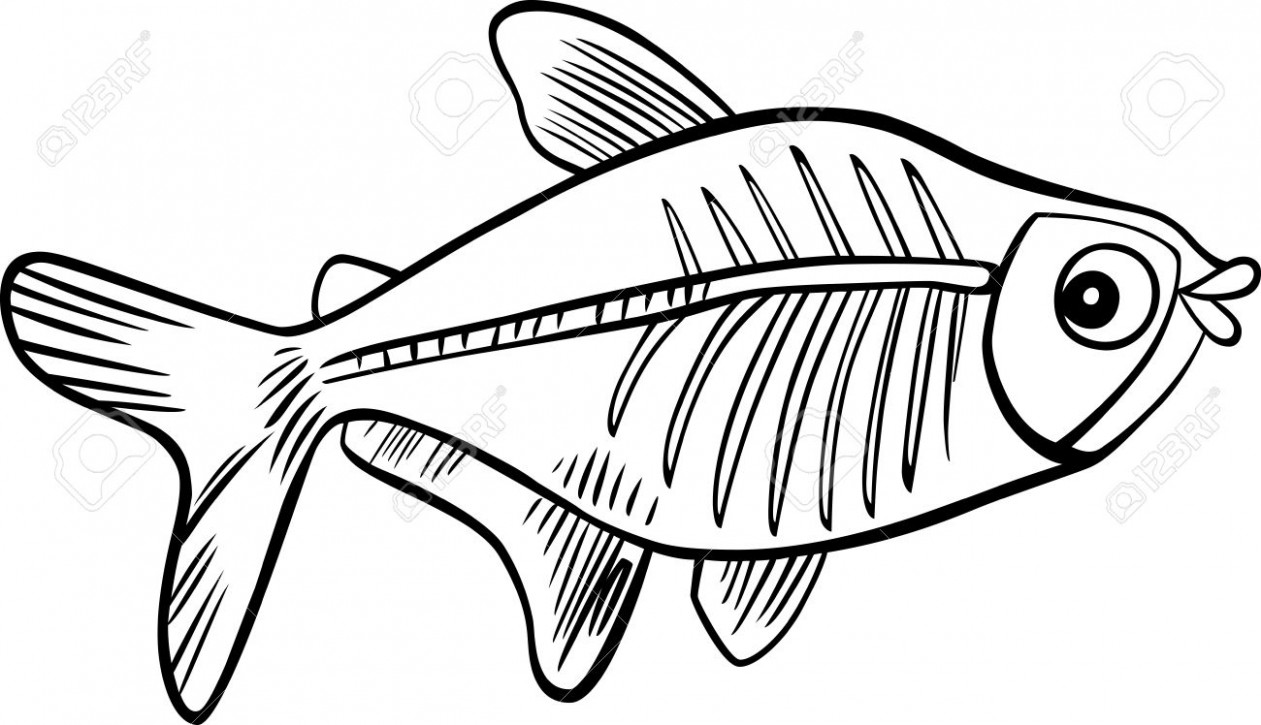 Cartoon Illustration Of X-ray Fish For Coloring Book Royalty Free ...