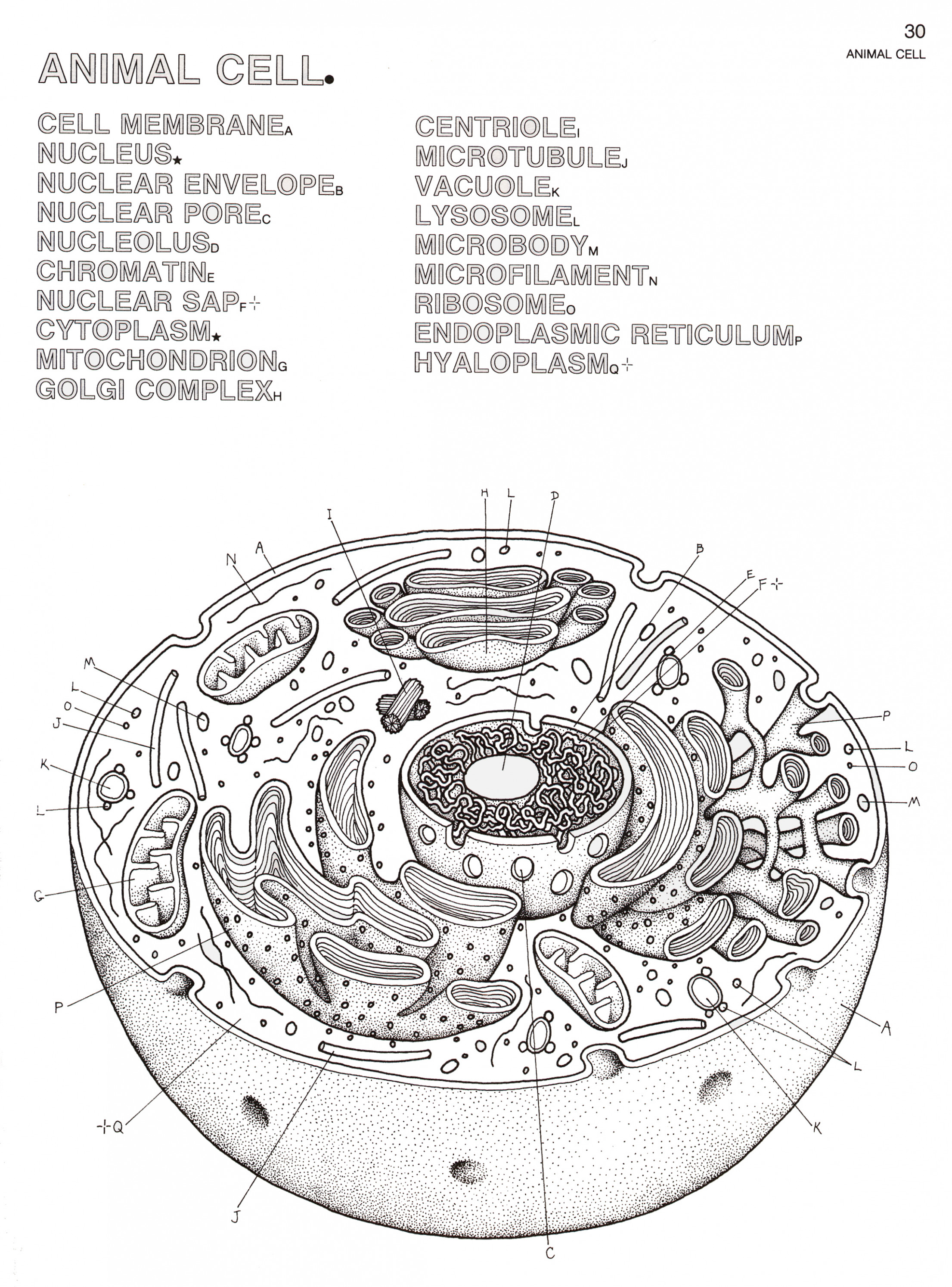 Coloring Pages. The Biology Coloring Book Pdf - Liandola.com