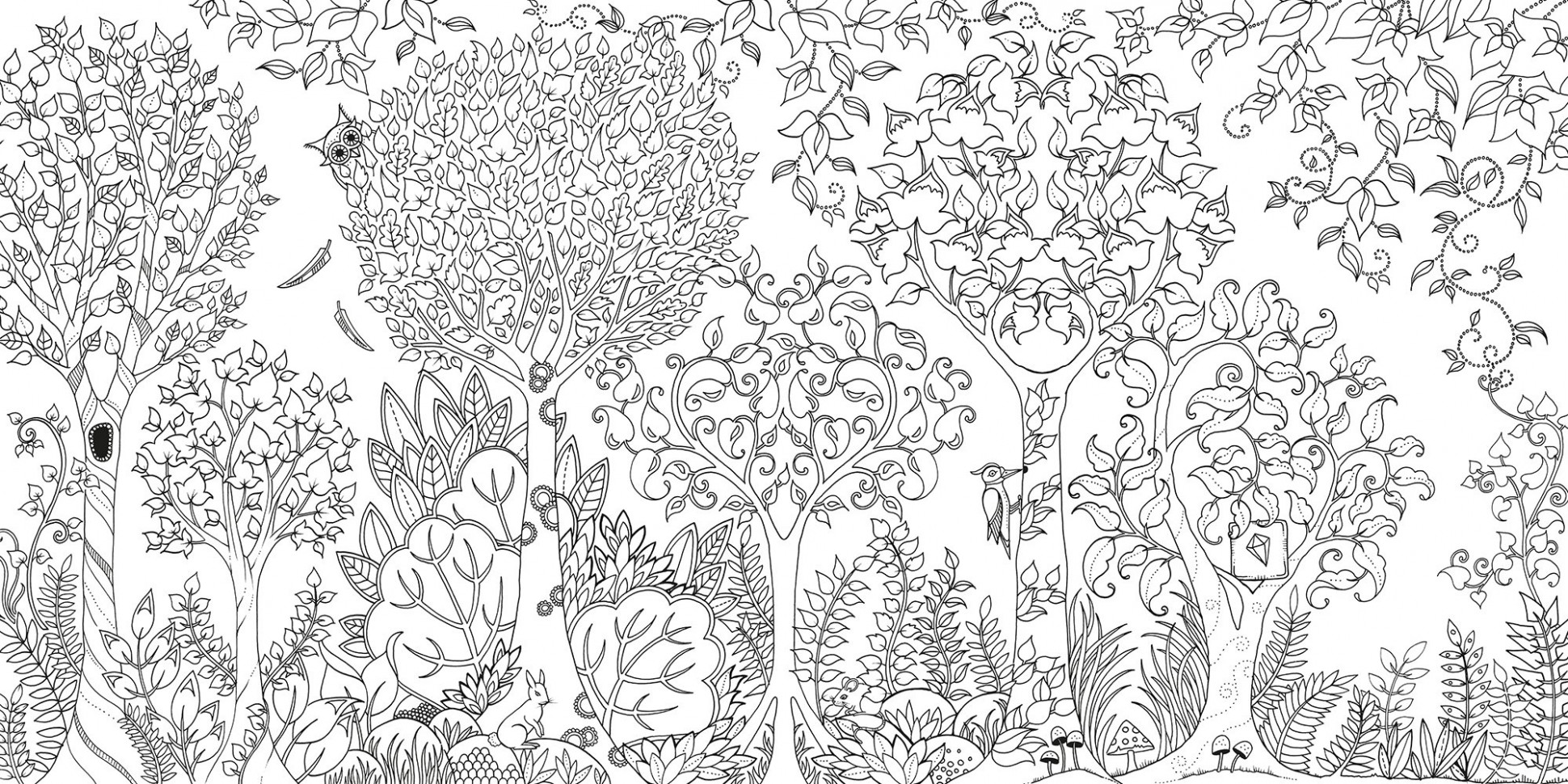 Enchanted Forest Colouring Book | Finlee  – enchanted forest coloring book