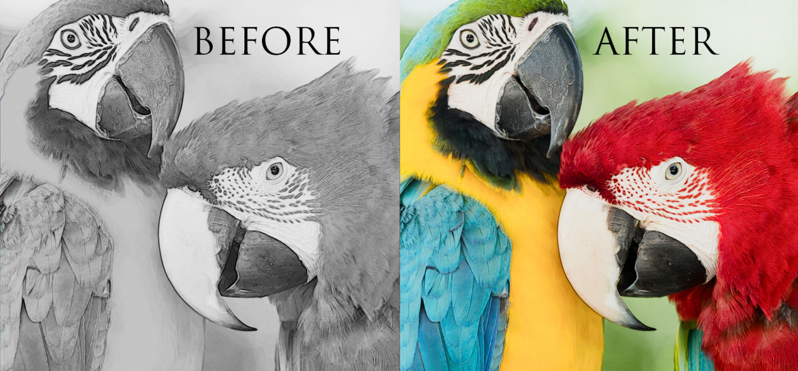 Have you tried greyscale coloring yet? It's incredible! – grayscale coloring book