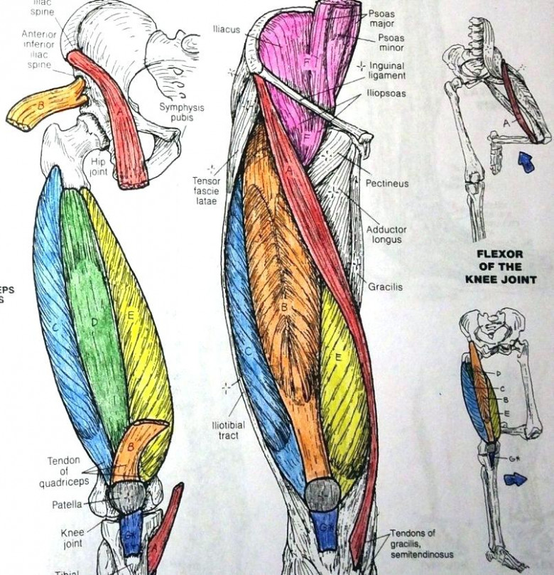 Ideas Netters Anatomy Coloring Book Pdf Or Netter Coloring Book ..