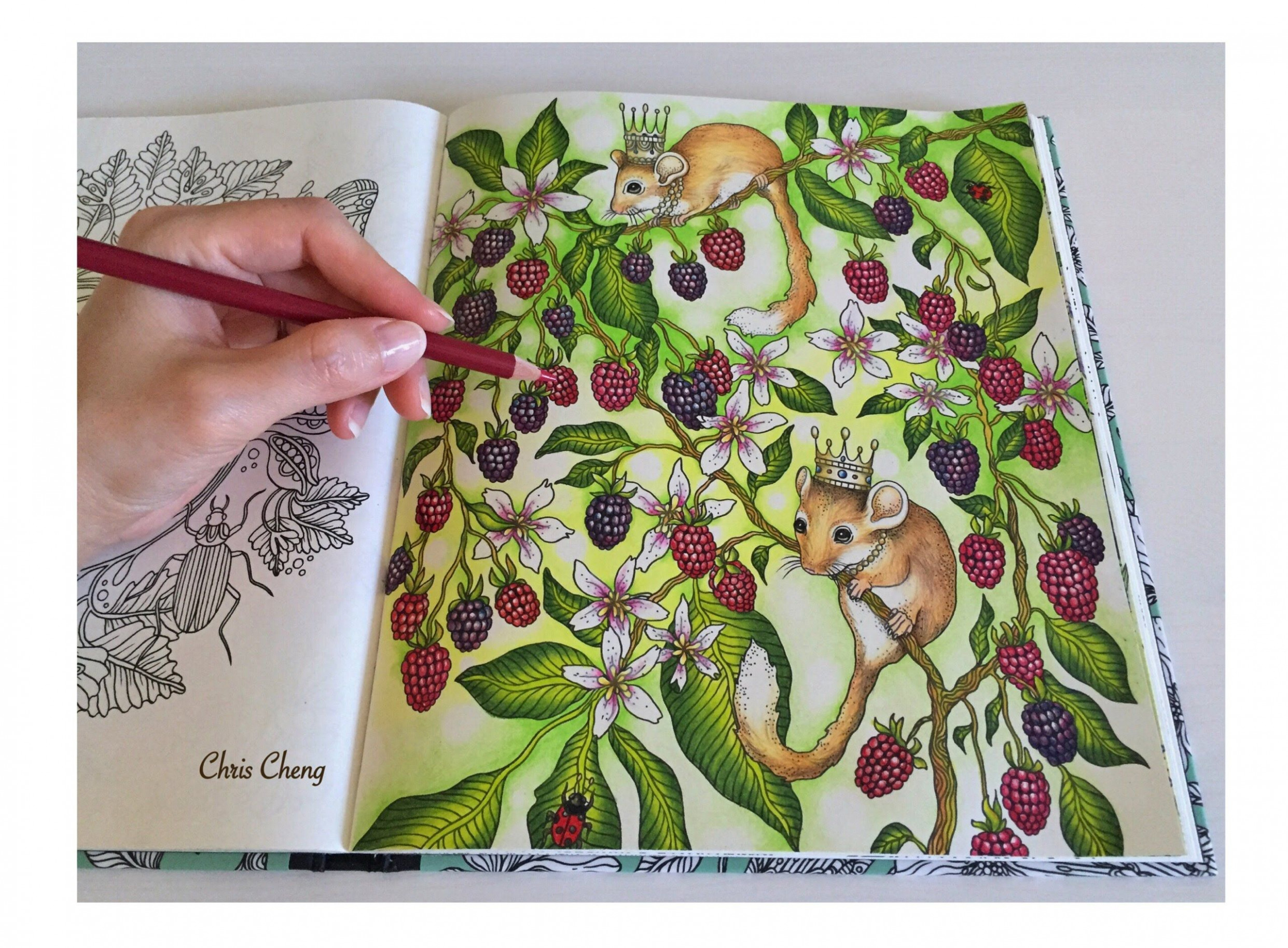 Mouse Wonderland | Daydreams Coloring Book | Coloring With Colored ...