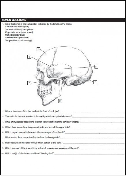 netter s anatomy coloring book pdf free direct link | News to Gow ..