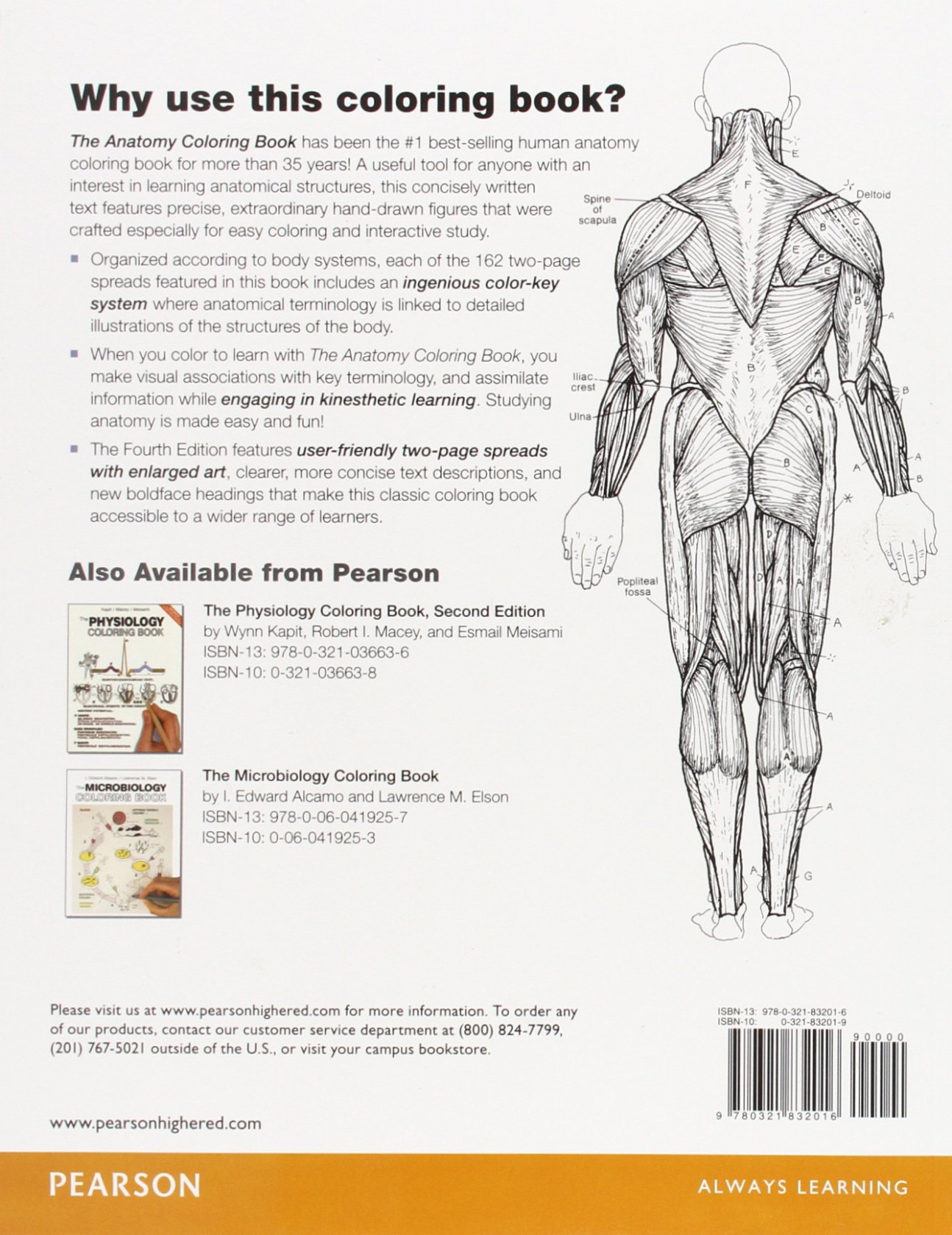 The Anatomy Coloring Book: Amazon.co.uk: Wynn Kapit, Lawrence M ...