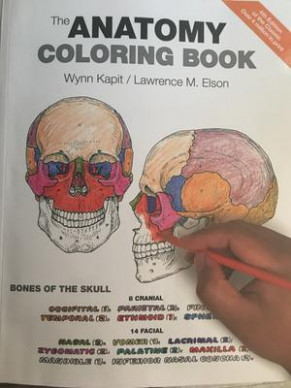 The Anatomy Coloring Book (Paperback) - Walmart