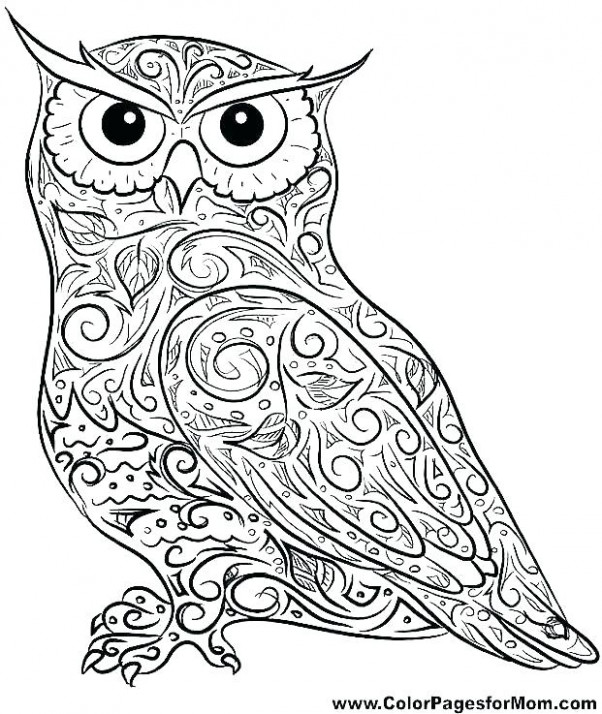 Free Printable Barn Coloring Pages Lovely Owl For Kids More Animals ...