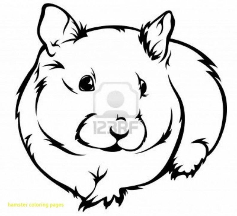 Hamster Coloring Pages Beautiful 18 Inspirational Hamster Coloring ..