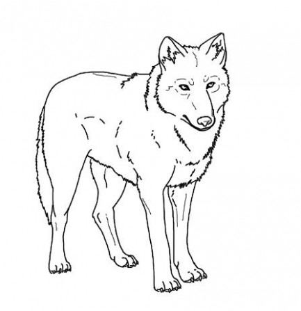 Realistic Wolf Coloring Pages To Print | 17 | Coloring pages to ..