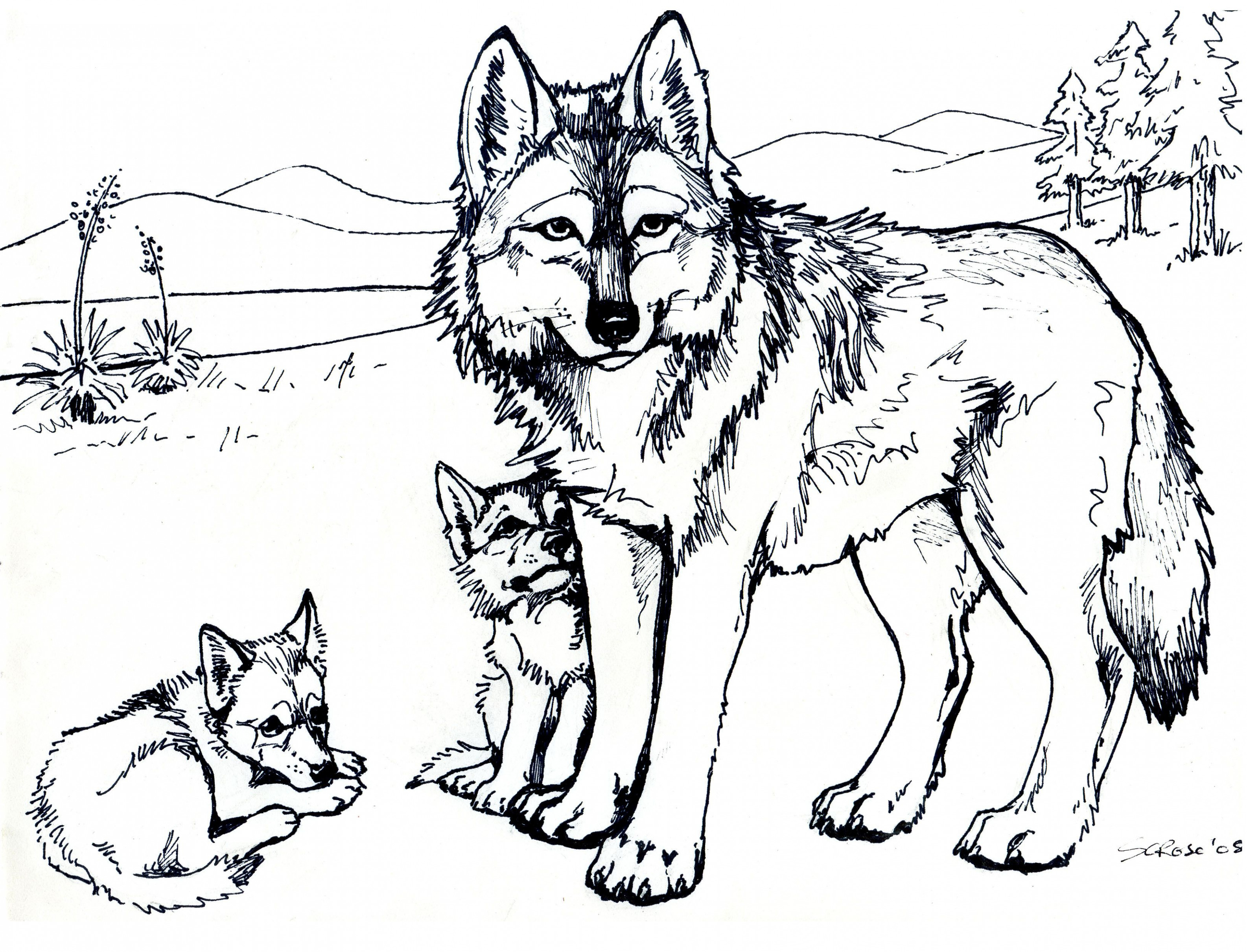wolf 17 | Christmas | Wolf colors, Coloring pages to print, Camping ..