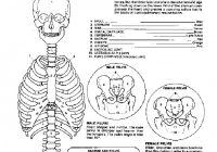 Anatomy coloring book pdf – Best coloring pages for kids – the anatomy coloring book pdf