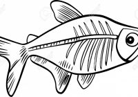 Cartoon Illustration Of X-ray Fish For Coloring Book Royalty Free ..