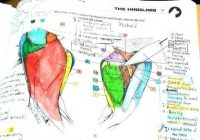 Idea The Anatomy Coloring Book Edition 17 And Veterinary Anatomy ..