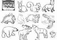 Jan Brett Christmas Coloring Pages With Image Result For How Do Animals Survive The Winter Worksheet Eco
