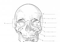 Kaplan Anatomy Coloring Book.pdf | Education | Pinterest | Anatomy ..