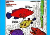 Marine Biology Coloring Book, 17e, The (HarperCollins Coloring Books ..