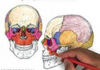 PDF DOWNLOAD The Anatomy Coloring Book Wynn Kapit Lawrence M. Elson ..